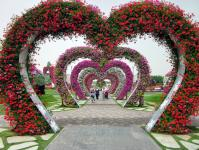 Imagine atasata: Dubai-Miracle-Garden-2.jpg