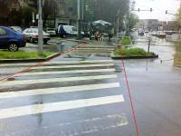 Imagine atasata: zebra 7.JPG