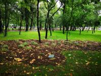 Imagine atasata: Parcul Central - 2019.08.03 - 18.jpg