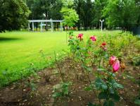 Imagine atasata: Parcul Central - 2019.08.03 - 54.jpg